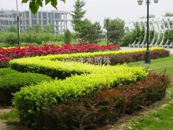 重庆市政绿化 市政绿化